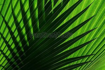 nahaufnahme von gruenen palmblaettern