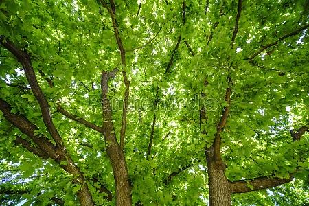 gruene baumzweige