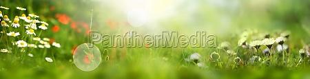 sonnige blumenwiese im fruehling