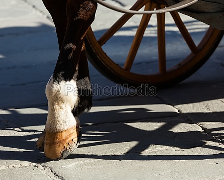 pferdehufe auf den flaggensteinen