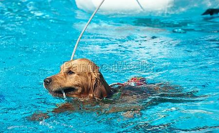 rettungsschwimmerhund