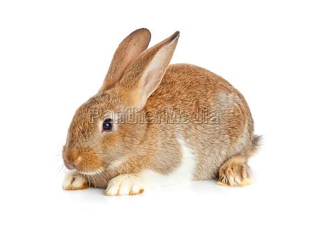 ein niedliches kaninchen sitzend