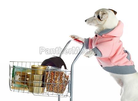 hund schiebt einen einkaufswagen voller nahrung