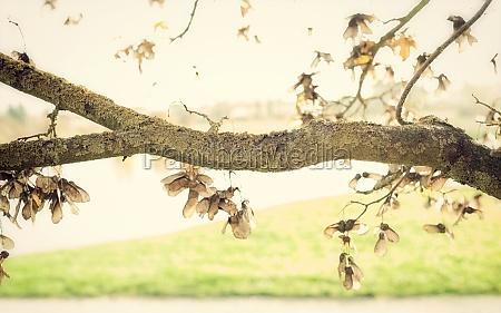 verzweigung mit natuerlichem hintergrund