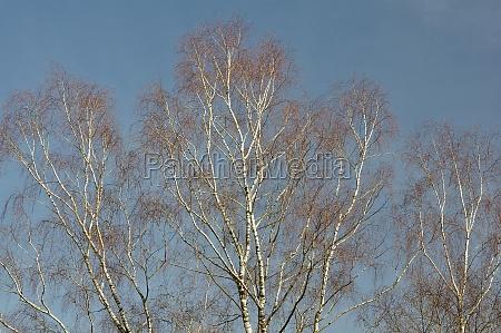 winter im naturreservat senne birken oerlinghausen