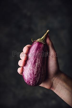 lila aubergine in der hand