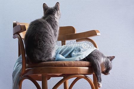 die katze langweilt sich neben einer