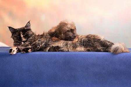zaertliche zweisamkeit in katze und hund