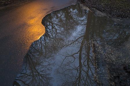 reflexion, von, bäumen, in, der, pfütze - 29677950