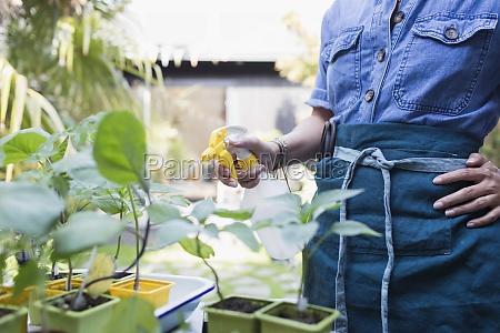 frau vernebelt topfpflanzen mit spruehflasche