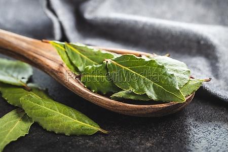 frische gruene lorbeerblaetter im holzloeffel