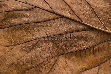 extreme nahaufnahme hintergrund textur von getrockneten