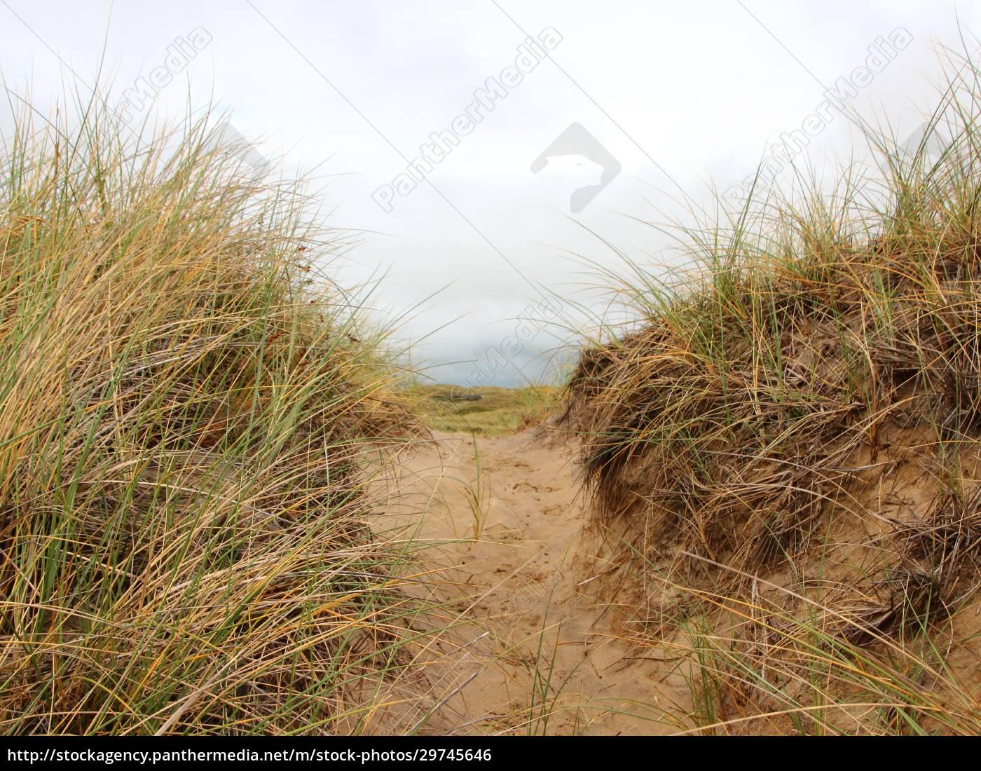 weg, durch, sanddüne, mit, wildrye - 29745646