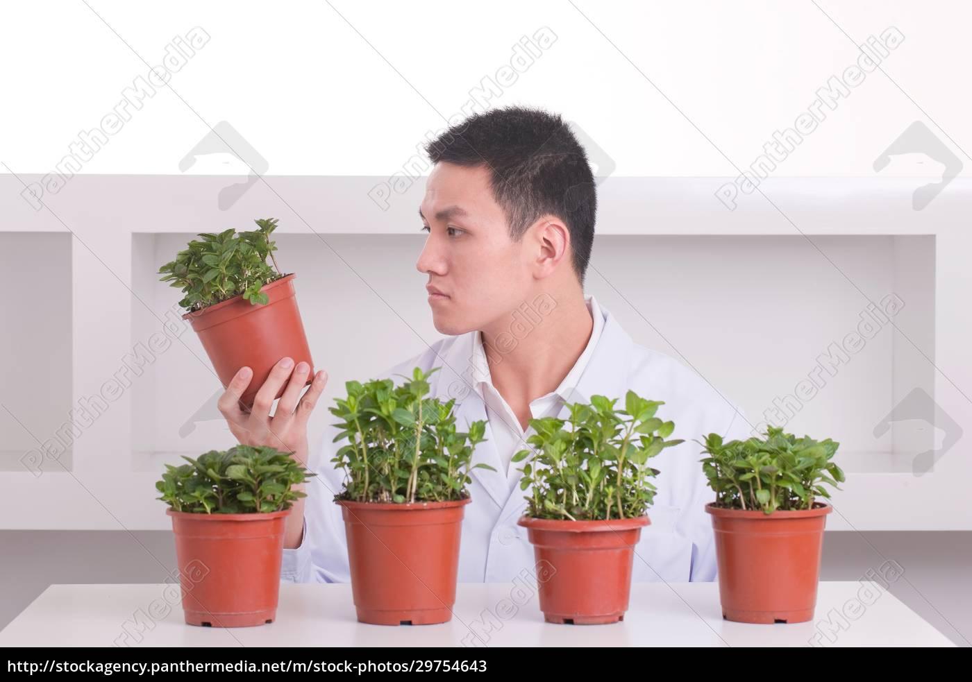 healthy, leisure, tech, medicine, plants, asians - 29754643
