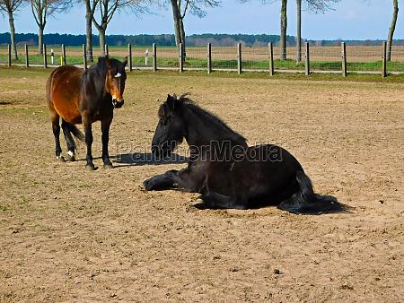 pferde im fahrerlager in der uckermark
