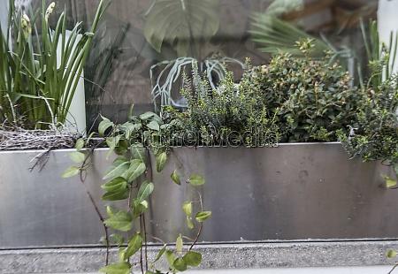 garten, mit, verschiedenen, pflanzen, und, kräutern - 29767040