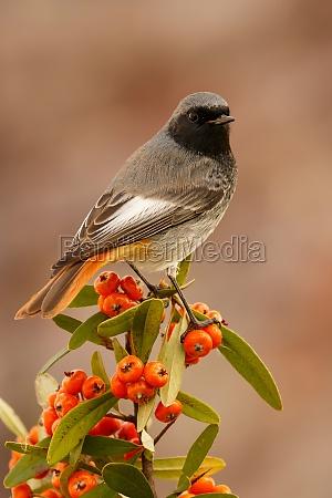 pretty, bird, with, a, nice, orange - 29778912