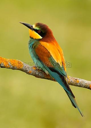 portraet eines bunten vogels