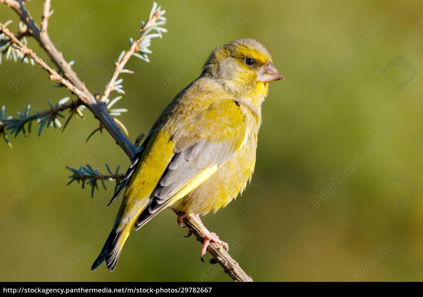 pretty, bird, in, the, nature - 29782667