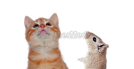 katze und maus suchen isoliert nach