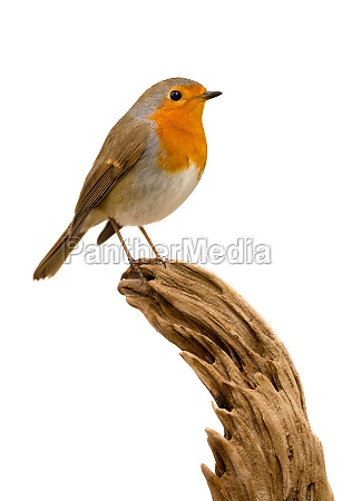 beautiful, small, bird - 29783952