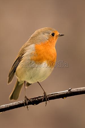 pretty, bird, with, a, nice, orange - 29783837