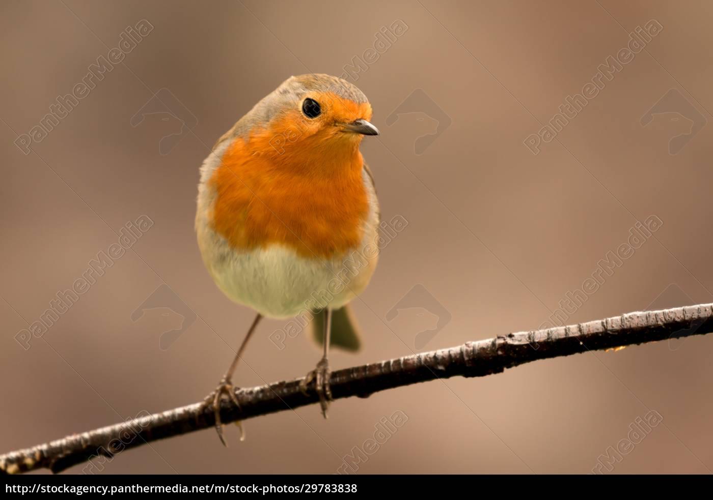 pretty, bird, with, a, nice, orange - 29783838