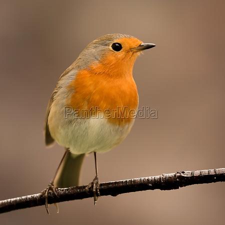 pretty, bird, with, a, nice, orange - 29783839