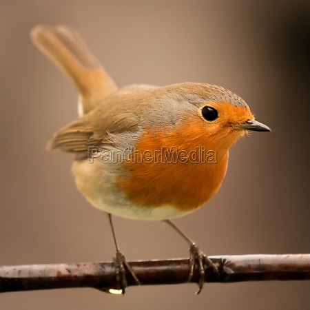pretty, bird, with, a, nice, orange - 29783843