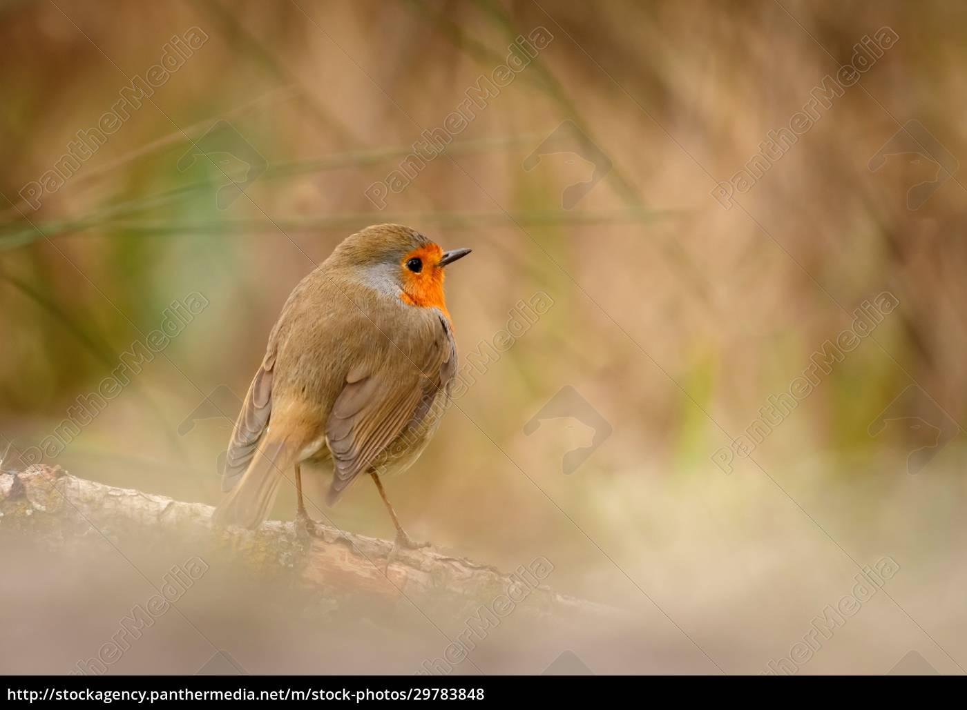 pretty, bird, with, a, nice, orange - 29783848