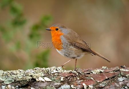 pretty, bird, with, a, nice, orange - 29783852