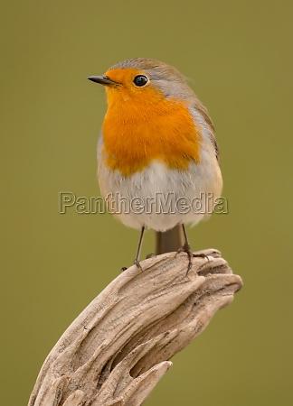 pretty, bird, with, a, nice, orange - 29783858
