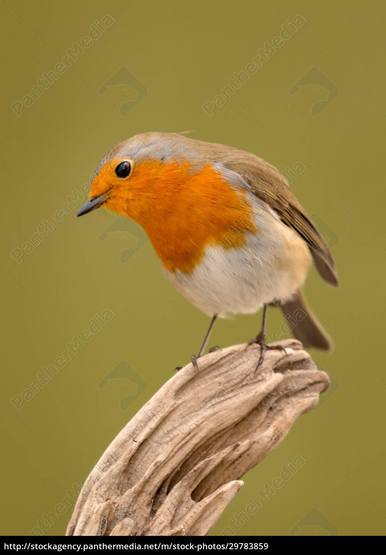 pretty, bird, with, a, nice, orange - 29783859