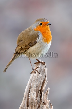pretty, bird, with, a, nice, orange - 29783958