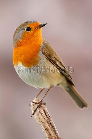 pretty, bird, with, a, nice, orange - 29783960