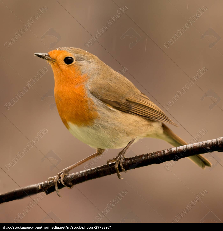 pretty, bird, with, a, nice, orange - 29783971