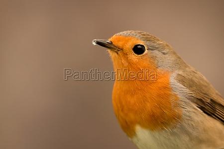 pretty, bird, with, a, nice, orange - 29783973