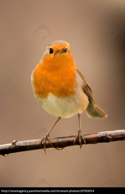 pretty, bird, with, a, nice, orange - 29783974