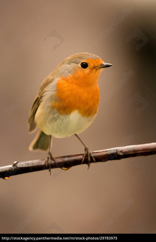pretty, bird, with, a, nice, orange - 29783975