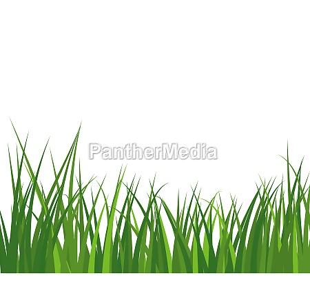 pflanze wiese fruehling natur isoliert sommer