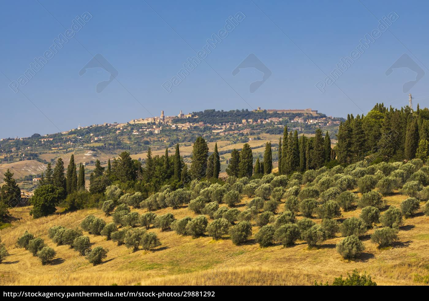 olive, garden, and, volterra, in, tuscany, - 29881292