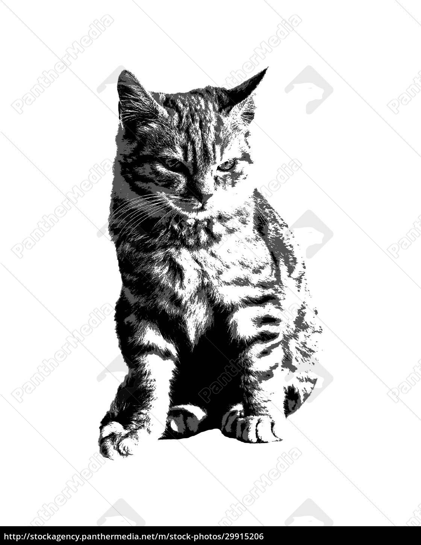 kitten, cat, stencil, style, graphic - 29915206