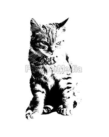 kitten, cat, stencil, style, graphic - 29915207