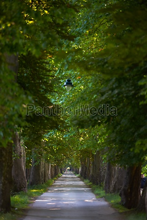 country, road, trought, tree, , alley - 29977987