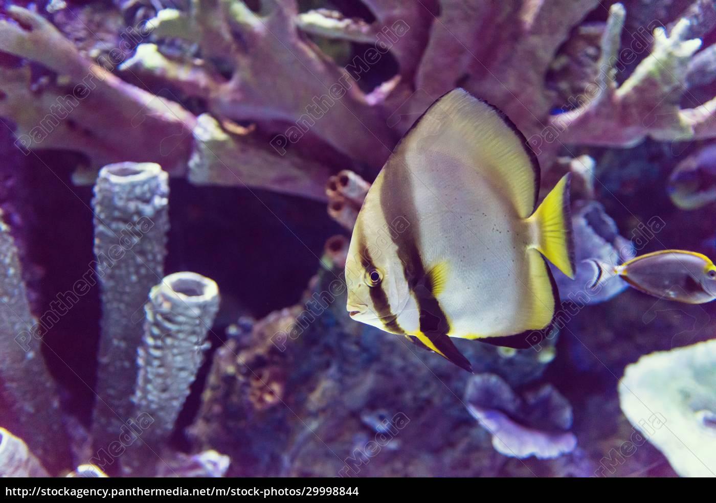 aquarium, with, colorful, fishes - 29998844
