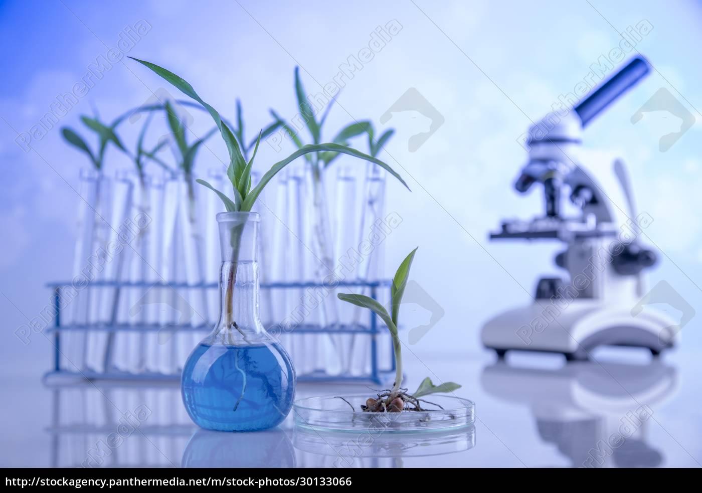 chemistry, equipment, , plants, laboratory, experimental - 30133066