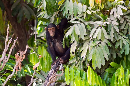 africa, , gambia, , gambia, national, park, - 30147704
