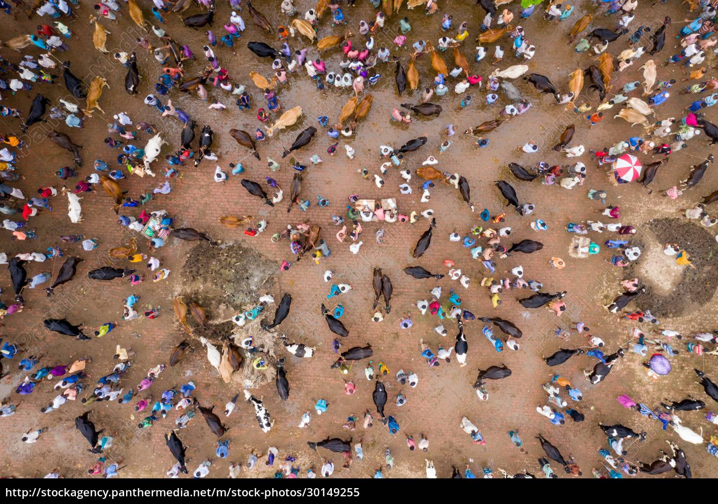 aerial, view, of, people, feeding, animals - 30149255