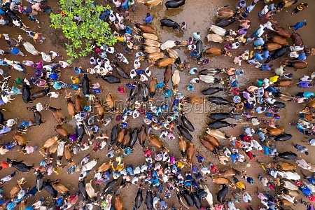 aerial, view, of, people, feeding, animals - 30149409