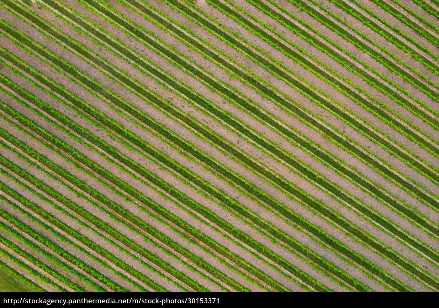 aerial, view, of, vineyard, and, the - 30153371